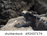 floreana island  galapagos   ca.... | Shutterstock . vector #692437174