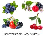 berries collection isolated on... | Shutterstock . vector #692438980