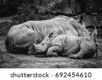 Rhino Calf Sleeping Up Against...