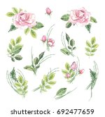 banner with flowering pink... | Shutterstock . vector #692477659