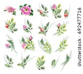 banner with flowering pink... | Shutterstock . vector #692477716