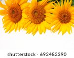 bright sunflowers on a white
