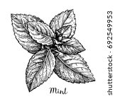 ink sketch of mint. isolated on ... | Shutterstock .eps vector #692549953