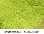 structure of leaf surface | Shutterstock . vector #692608204