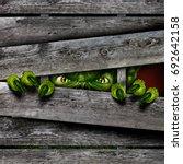 creepy horror monster zombie... | Shutterstock . vector #692642158