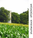 Small photo of Tobacco Field with sunflower field in the background