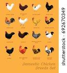 Domestic Chicken Breeds Set...
