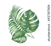 green tropic palm leaves... | Shutterstock . vector #692787004