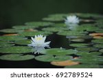 japanese lotus flower nymphaea... | Shutterstock . vector #692789524
