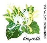 honeysuckle  lonicera  japonica ... | Shutterstock .eps vector #692797156