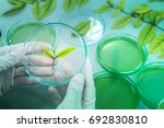 scientist with natural drug... | Shutterstock . vector #692830810
