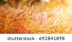 golden wheat field and sunny... | Shutterstock . vector #692841898