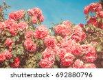 Stock photo rose garden 692880796