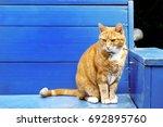 red cat over a blue wooden bench   Shutterstock . vector #692895760