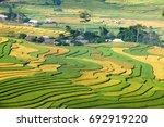 rice fields prepare the harvest ... | Shutterstock . vector #692919220