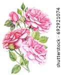 bouquet pink roses flowers and... | Shutterstock . vector #692921074