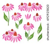echinacea flowers icons... | Shutterstock .eps vector #692925820