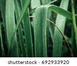 vetiver | Shutterstock . vector #692933920