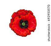 vector red poppy flower... | Shutterstock .eps vector #692953570