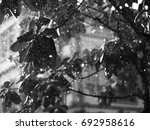 black and white photo of close... | Shutterstock . vector #692958616