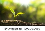 plant seeding close up young... | Shutterstock . vector #693066493
