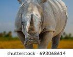 closeup rhinoceros on blur... | Shutterstock . vector #693068614