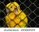 Yellow Macaw Parrot Found In...