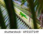 lizard tropical background sun... | Shutterstock . vector #693107149