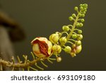 boom sala flowers on the sala... | Shutterstock . vector #693109180