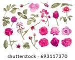 elegant decorative vector rose... | Shutterstock . vector #693117370