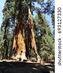 sequoia | Shutterstock . vector #693127330