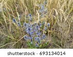 wildflowers | Shutterstock . vector #693134014