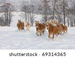 Batch of horses running - stock photo