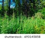 meadow in a green faery summer... | Shutterstock . vector #693145858