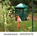 A Pair Of Male Cardinal Bird...