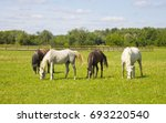 Horses Grazing In A Field Near...