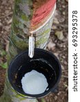 Small photo of Tapping latex from a rubber tree at Thailand