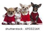 Chihuahuas Dressed In Santa...