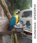 Small photo of Thailand intelligent parrots Psittacidae
