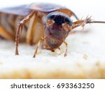 closeup cockroach on the whole... | Shutterstock . vector #693363250
