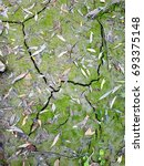 Small photo of cracked dried river silt with multicolored leaves