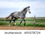 grey arabian stallion running... | Shutterstock . vector #693378724