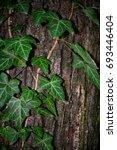 Small photo of Ivy vine