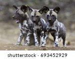 African Wild Dog Siblings
