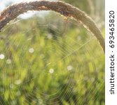 Small photo of Spider in an ambush. Macro.Hunting time when the morning sun lights the nature came.