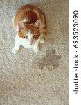 cute cat sitting on carpet near ... | Shutterstock . vector #693523090