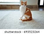Stock photo cute cat sitting on carpet near wet spot 693523264