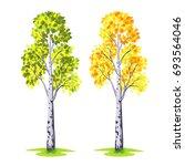 tree birch on white background... | Shutterstock .eps vector #693564046