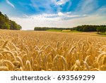 golden oats field at sunset.... | Shutterstock . vector #693569299