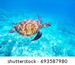 green sea turtle undersea. big... | Shutterstock . vector #693587980